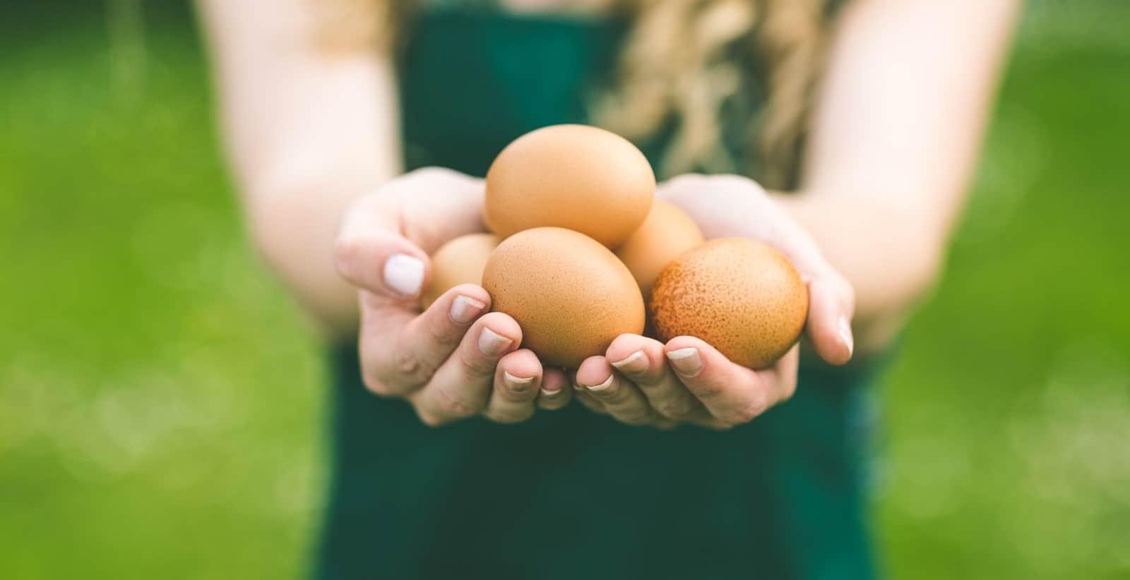 Genialny biznes oparty na kurzych jajach